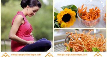 Đông trùng hạ thảo cho phụ nữ có thai như thế nào